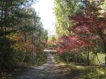 fall pix 2012 009